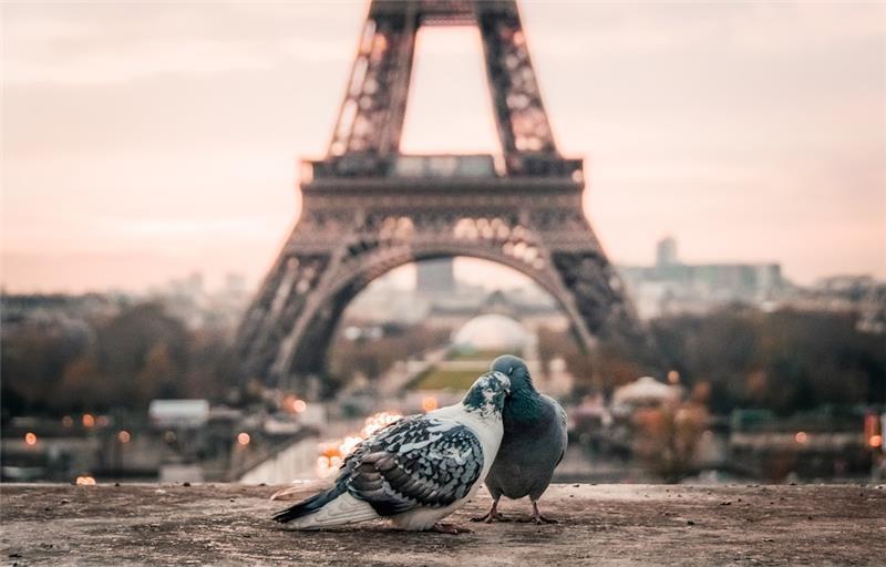 Pariz i Disneyland
